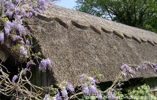 Lovely Thatch Cottage