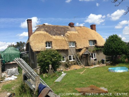 Big Thatch Job