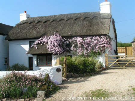 Cute Thatched Cottage