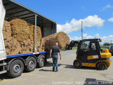 Loading Water Reed on a Lorry
